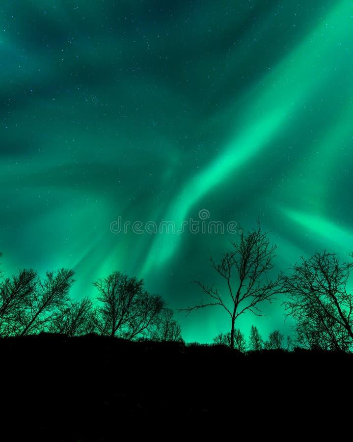 Verbazende Aurora Borealis in Noord-Noorwegen boven bomenmo stock afbeelding