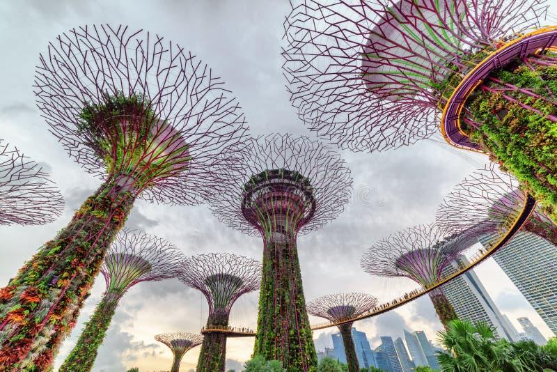 Verbazende avondmening van het Supertree-Bosje met Skyway royalty-vrije stock foto