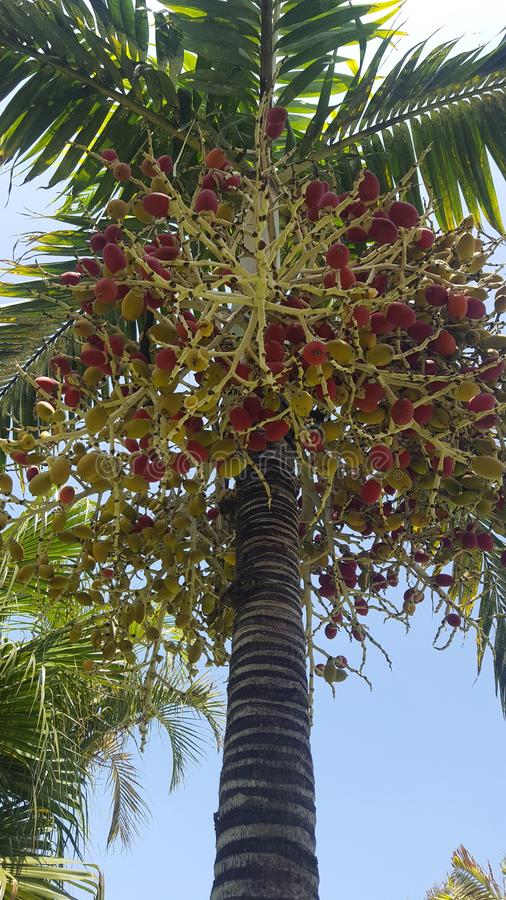 Verbazende boom in een mooi park stock foto