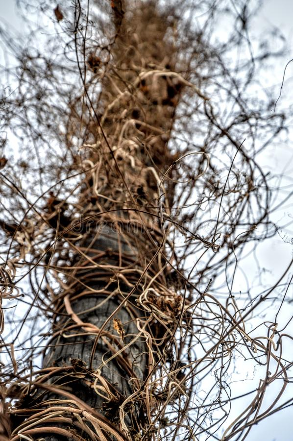 Verbazende boom, hemel stock afbeelding