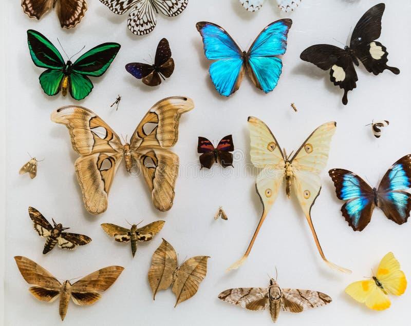 Verbazende close-upmening van vele diverse kleurrijke vlinders op lichte grijsachtige achtergrond stock afbeeldingen