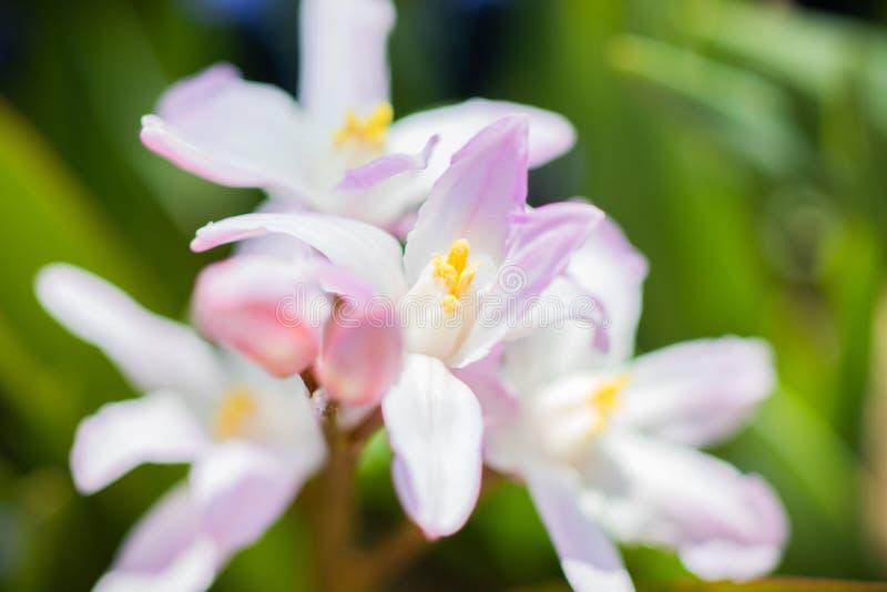 Verbazende de zomerbloem in de mooie macrofoto van de tuinclose-up stock afbeelding