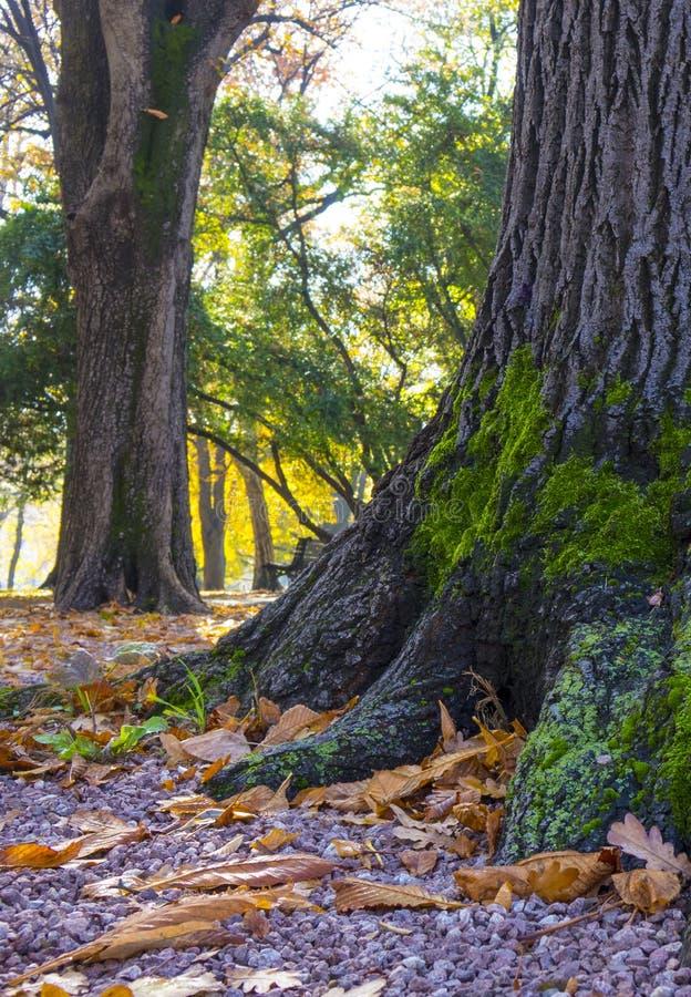 Verbazende die foto van een boom met mos wordt behandeld stock foto