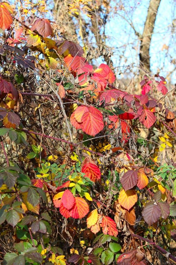 Verbazende dingen rond ons in aard - kleuren van de Herfst stock afbeeldingen