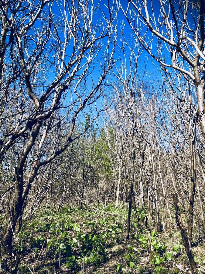 Verbazende het uitnodigen mening van ontwakenaard in de lentetijd in het park van Toronto op zonnige grote warme dag royalty-vrije stock fotografie