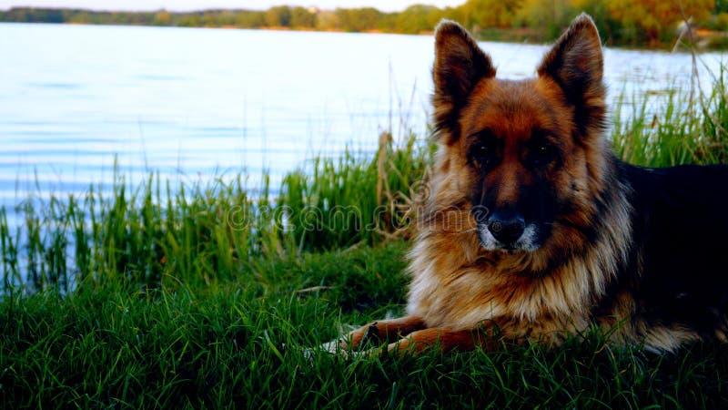 Verbazende hond royalty-vrije stock afbeeldingen