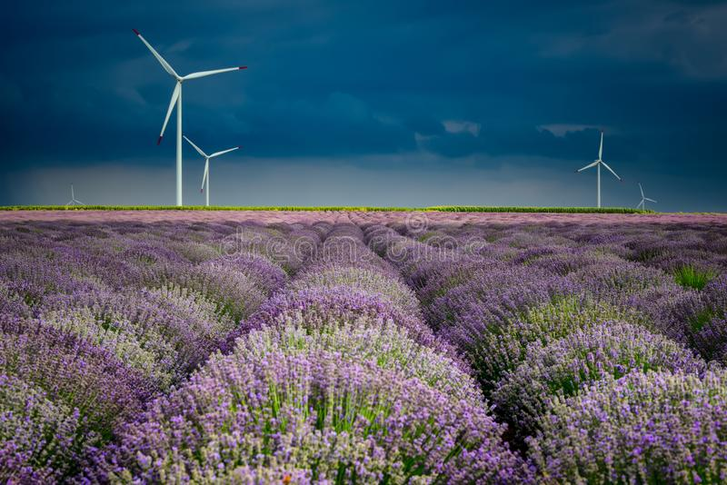Verbazende lavendelgebieden in de de zomertijd met onweerswolken en raibow royalty-vrije stock afbeelding