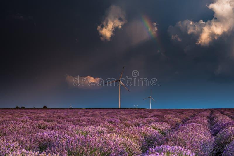 Verbazende lavendelgebieden in de de zomertijd met onweerswolken en raibow stock fotografie
