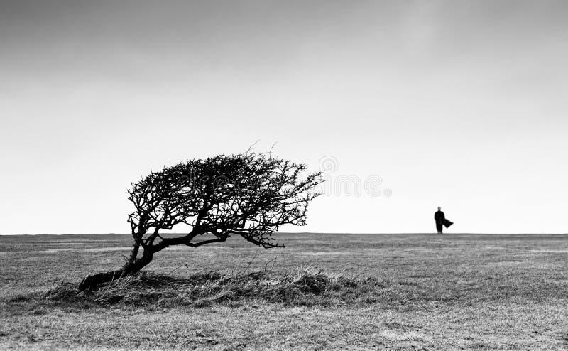 Verbazende mening met krommingsboom en silhouet van de mens op horizon stock fotografie