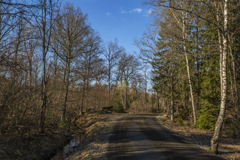 Verbazende mening over de lentebos met groene bomen op blauwe hemel met witte wolkenachtergrond Groene gele bomen en weg stock fotografie