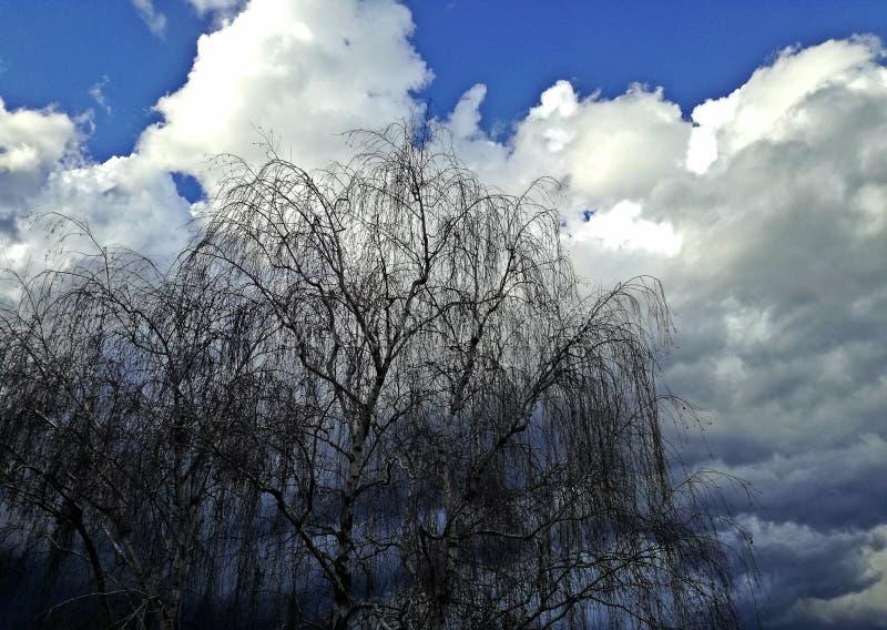 Verbazende mening van balkon blauwe hemel, perfecte witte wolken en boom royalty-vrije stock foto's