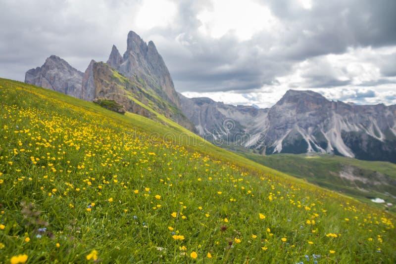 Verbazende mening van de 'Italiaan van de Vijf Pijlers: Cinque Torri met bloeiende weiden: vers groen gras en gele bloemen, Dolom royalty-vrije stock afbeelding