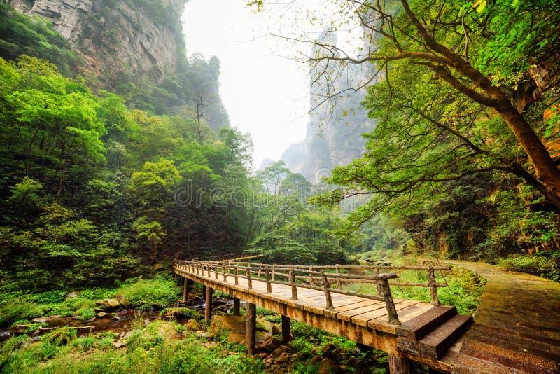 Verbazende mening van houten brug over rivier bij bodem van diepe kloof stock foto's