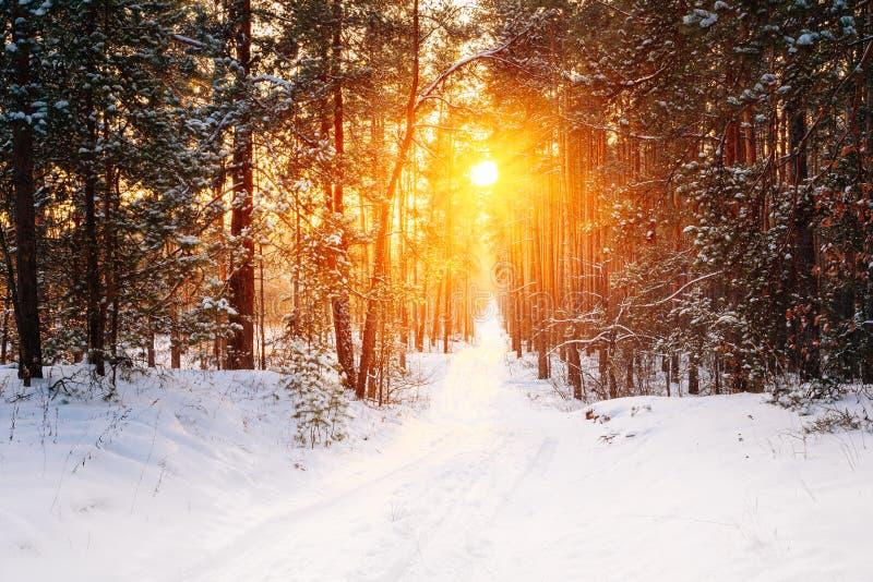 Verbazende Mooie de zonzonneschijn van de zonsondergangzonsopgang in zonnig de wintersn stock afbeeldingen