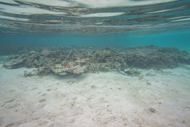 Verbazende onderwaterwereldmening Dode ertsaderkoralen en mooie vissen in blauw water van Indische Oceaan snorkeling stock afbeeldingen