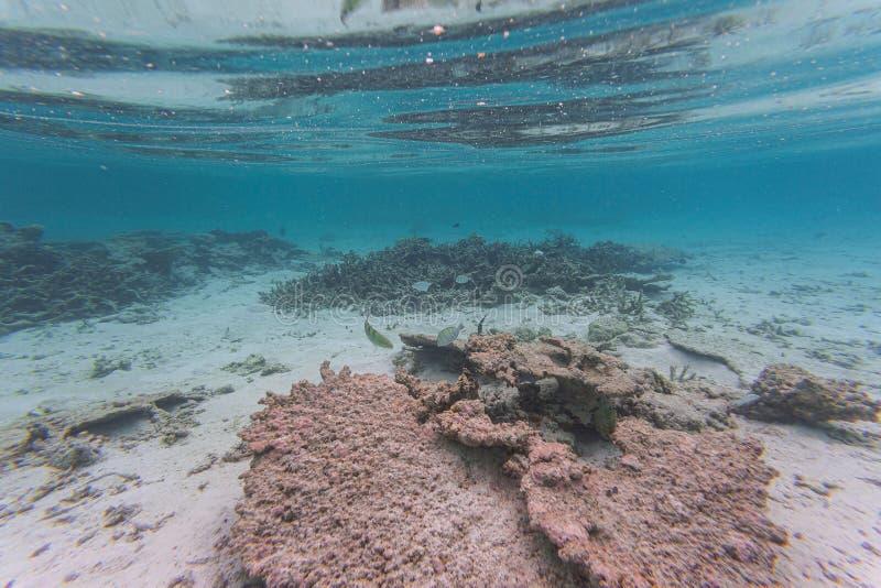 Verbazende onderwaterwereldmening Dode ertsaderkoralen en mooie vissen in blauw water van Indische Oceaan snorkeling royalty-vrije stock foto