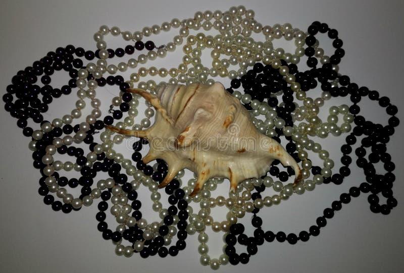 Verbazende shell en zwart-witte parels en witte achtergrond royalty-vrije stock afbeeldingen