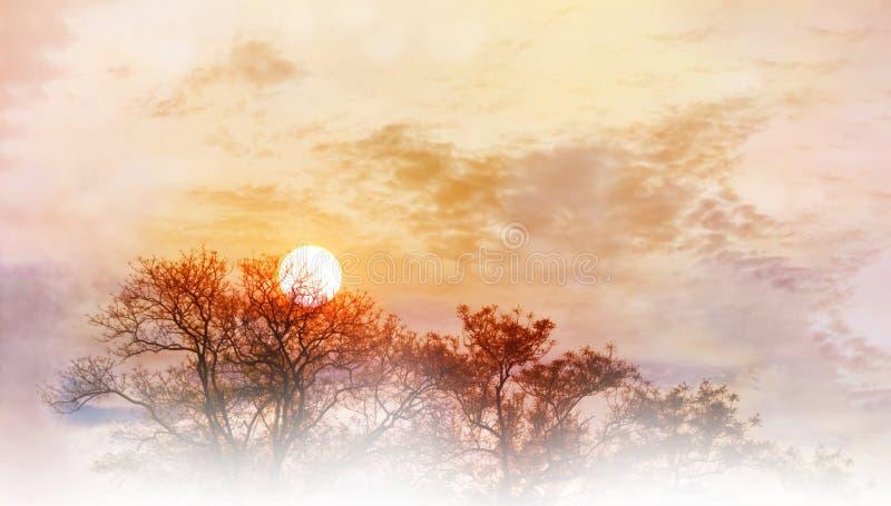 Verbazende van de aardhemel en boom hoogste mening met ochtendzonsopgang op col. royalty-vrije stock foto's
