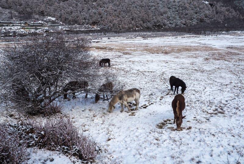 Verbazende wintertijd bij Yading-Natuurreservaat in Sichuan, China stock fotografie
