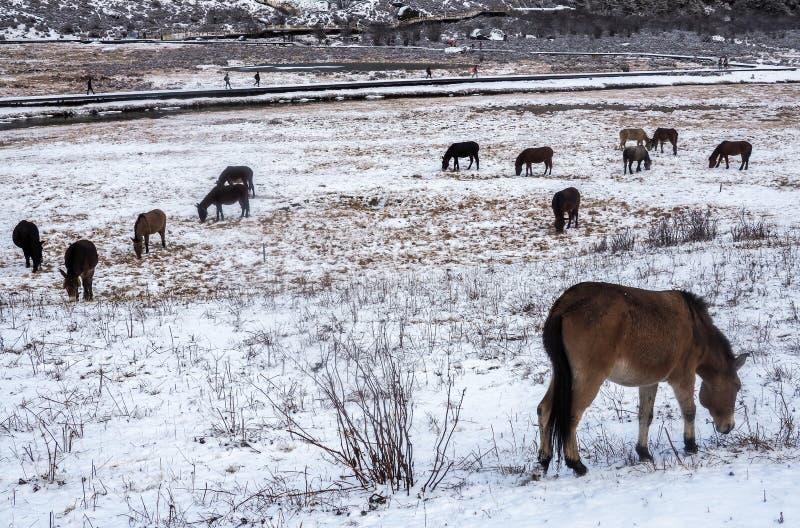 Verbazende wintertijd bij Yading-Natuurreservaat in Sichuan, China stock afbeeldingen