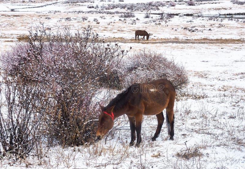 Verbazende wintertijd bij Yading-Natuurreservaat in Sichuan, China royalty-vrije stock afbeeldingen