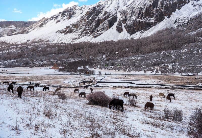Verbazende wintertijd bij Yading-Natuurreservaat in Sichuan, China royalty-vrije stock foto's