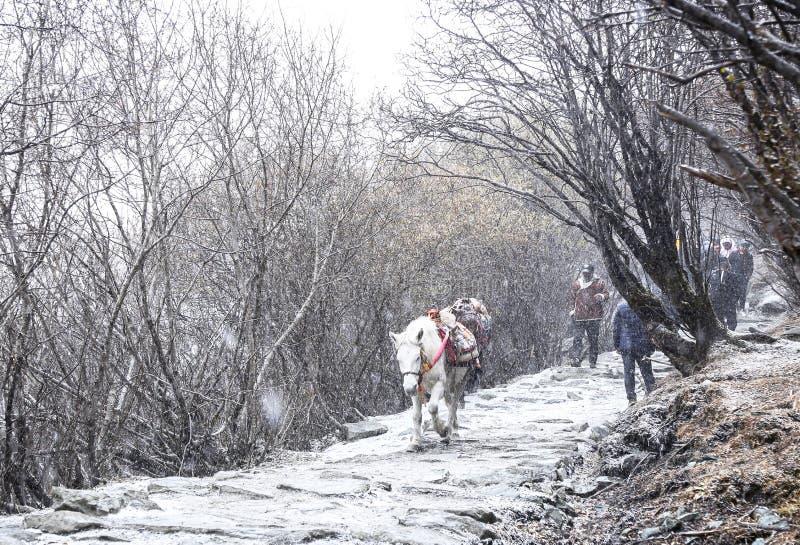 Verbazende wintertijd bij Yading-Natuurreservaat in Sichuan, China royalty-vrije stock fotografie