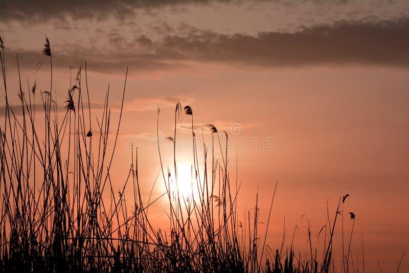 Verbazende zonsopgang in aardreserve van de delta van Donau stock fotografie