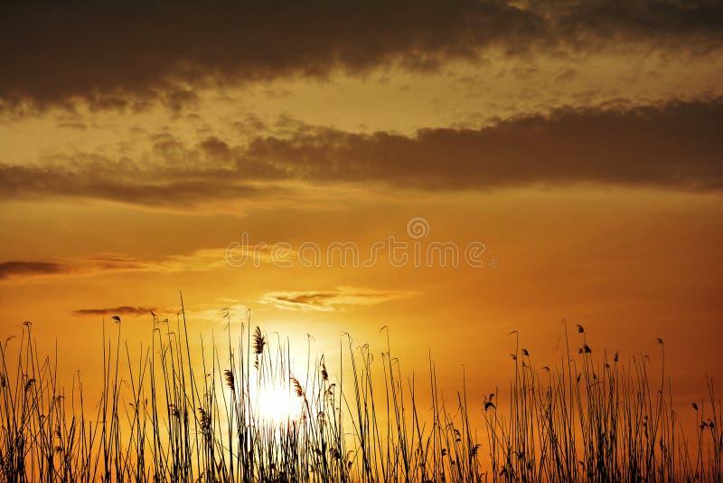 Verbazende zonsopgang in aardreserve van de delta van Donau royalty-vrije stock afbeelding