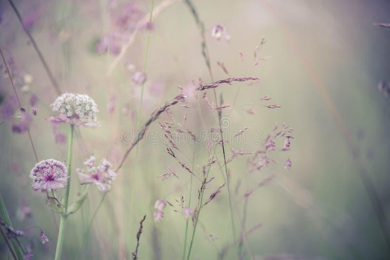 Verbazende zonsopgang bij de zomerweide met wildflowers stock foto's