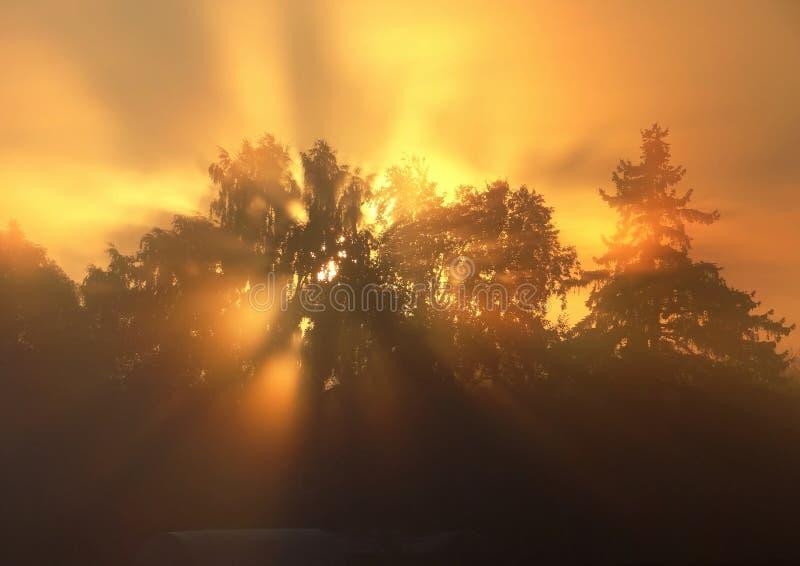 verbazende zonstralen Mistige de herfstochtend in Litouwen stock foto's