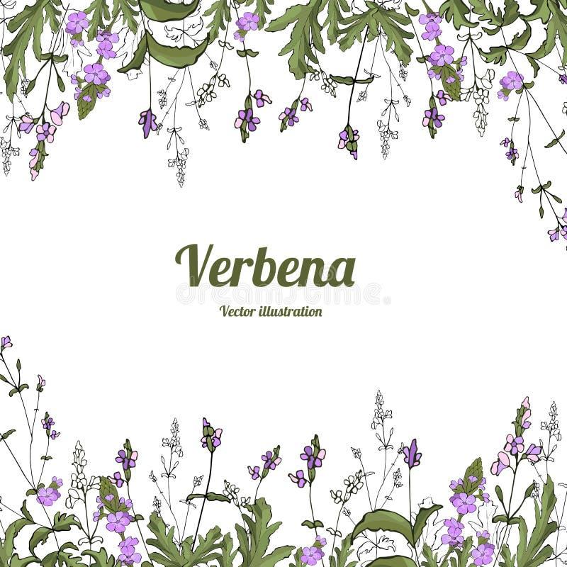 Verbena de la plantilla libre illustration
