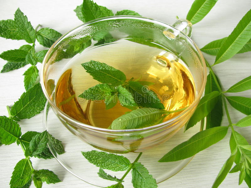 verbena för tea för växt- citronmint moroccan royaltyfria bilder