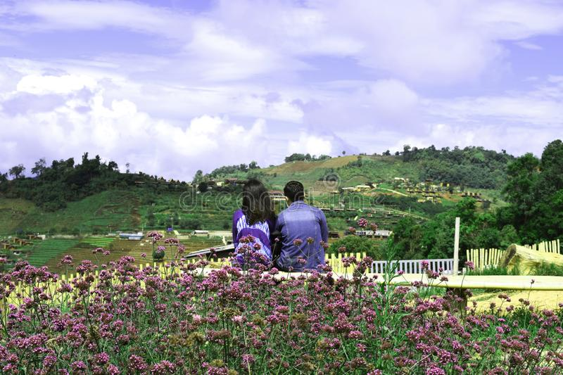 Verbena purple flowers on the background of mountains and blurred skies and morning light in the garden along with couples, men an stock images