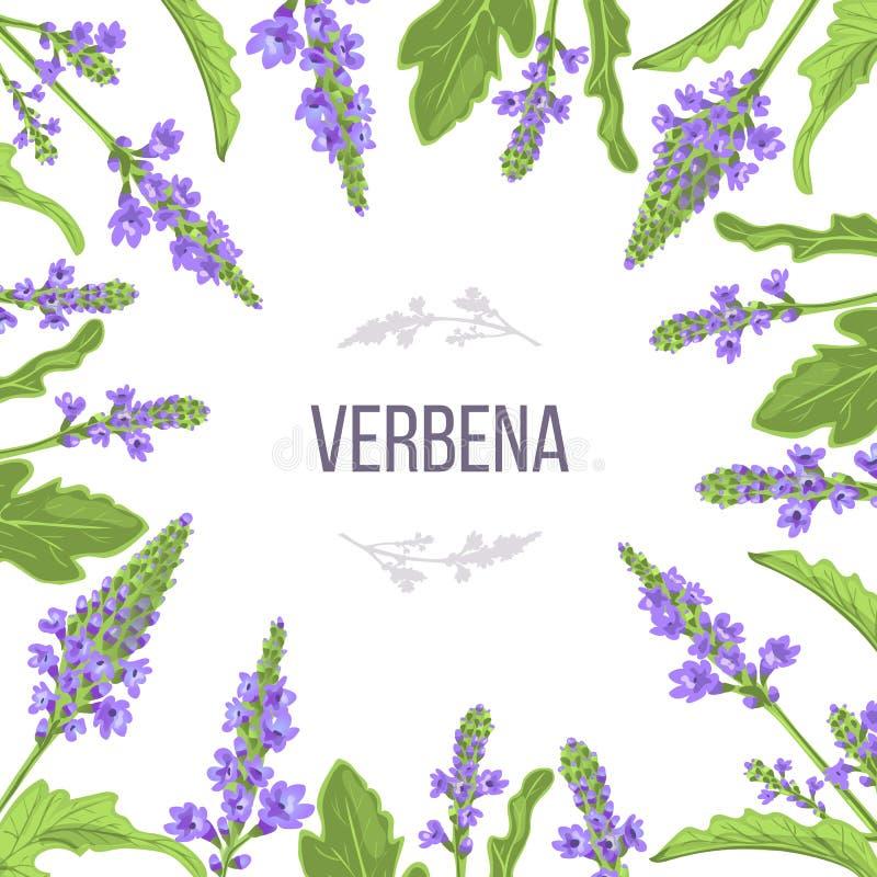 Verbene blüht und lässt Kartenschablone mit Kopienraum Niederlassungsverpacken Medizinisches Kraut des Verbenaceae vektor abbildung