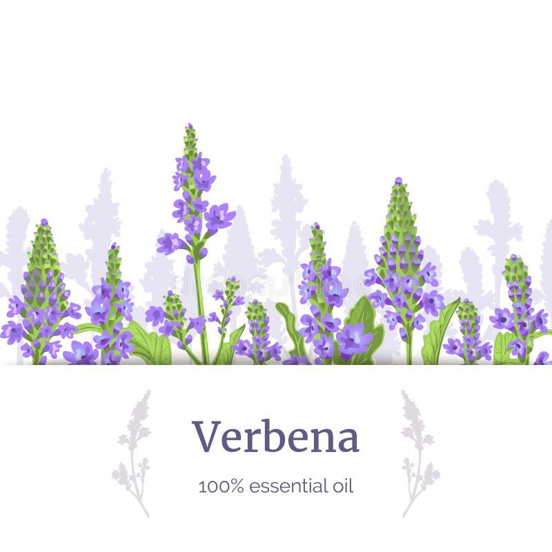 Verbeneanlage St?mme und Blumen Kraut-Vektor Illustration des Verbenaceae medizinische Streifen Sie Aufkleber, Kopienraum lizenzfreie abbildung