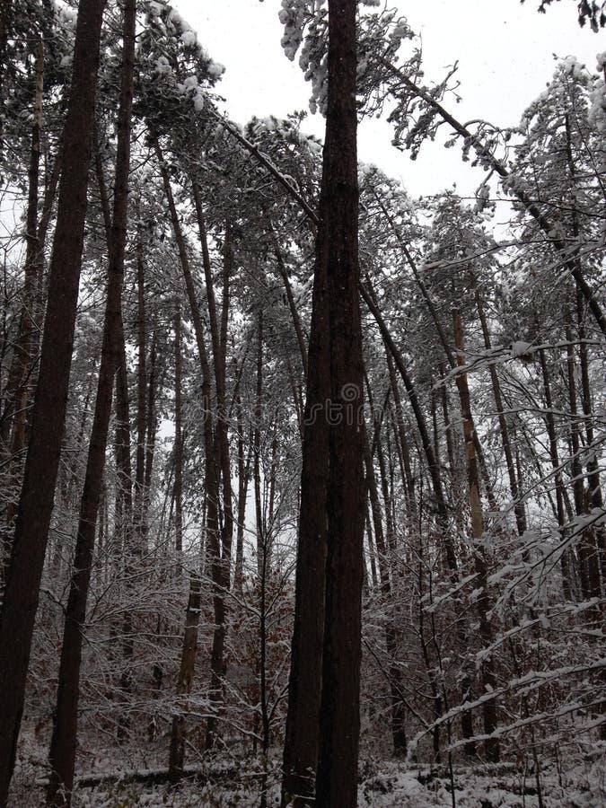 Verbiegende Bäume lizenzfreies stockfoto