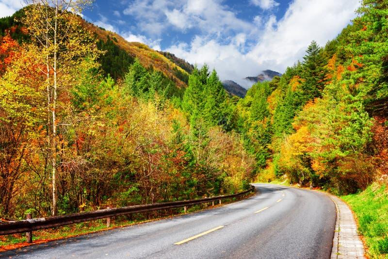 Verbiegende Straße unter buntem Fallholz Erstaunliche Herbst-Landschaft stockbilder