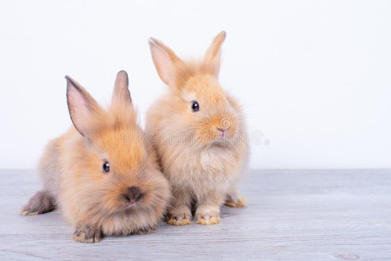 Verbinden Sie kleine hellbraune Kaninchen bleiben auf grauer hölzerner Tabelle mit weißem Hintergrund stockbild