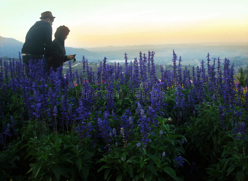 Verbinden Sie reizendes an der Landschaft mit hohem wildem Gras und purpurroten Blumen auf dem Hügel im hohen Berg stockfotografie