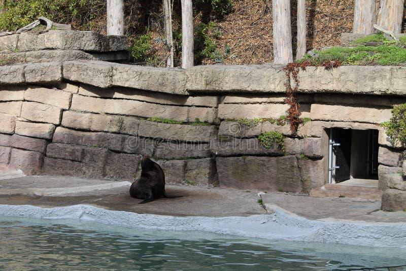 Verbinding bij de dierentuin stock afbeelding