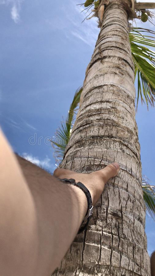Verbinding met de palm stock foto's