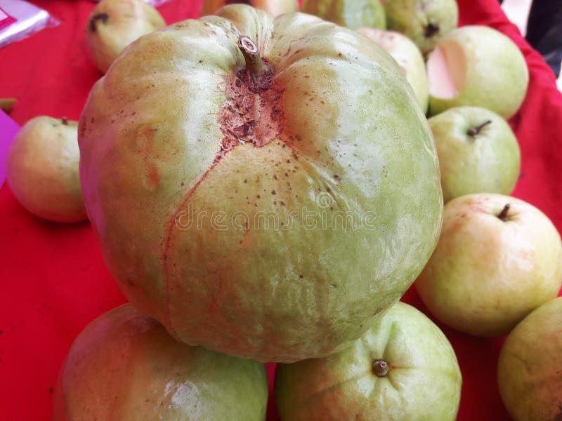 In Verbindung stehende Guave lizenzfreie stockfotografie