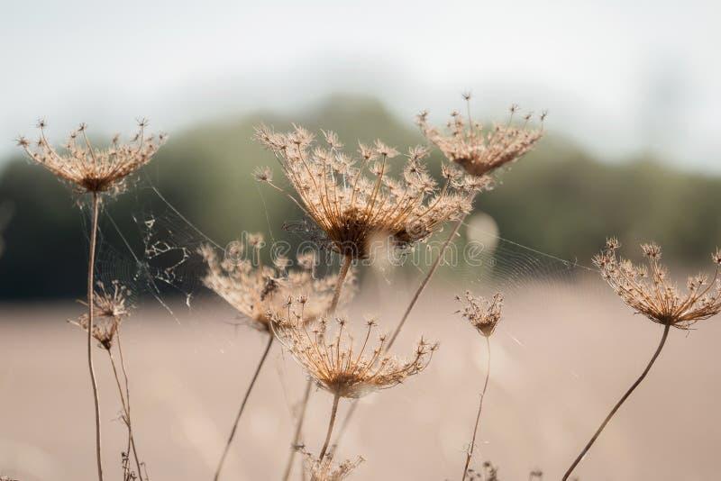 Verblaßte Blumen mit Spinnennetz lizenzfreie stockfotografie