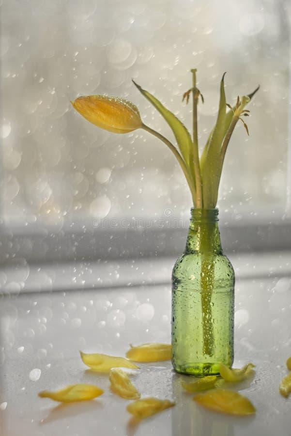 Verblaßte gelbe Tulpen in einem Vase und in den gefallenen Blumenblättern stockbild