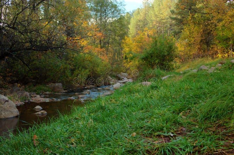 Verblassende Herbstsaison lizenzfreie stockfotografie