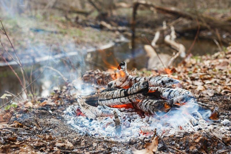 Verblassendes Feuer auf einem Waldfluß am Abend stockfoto