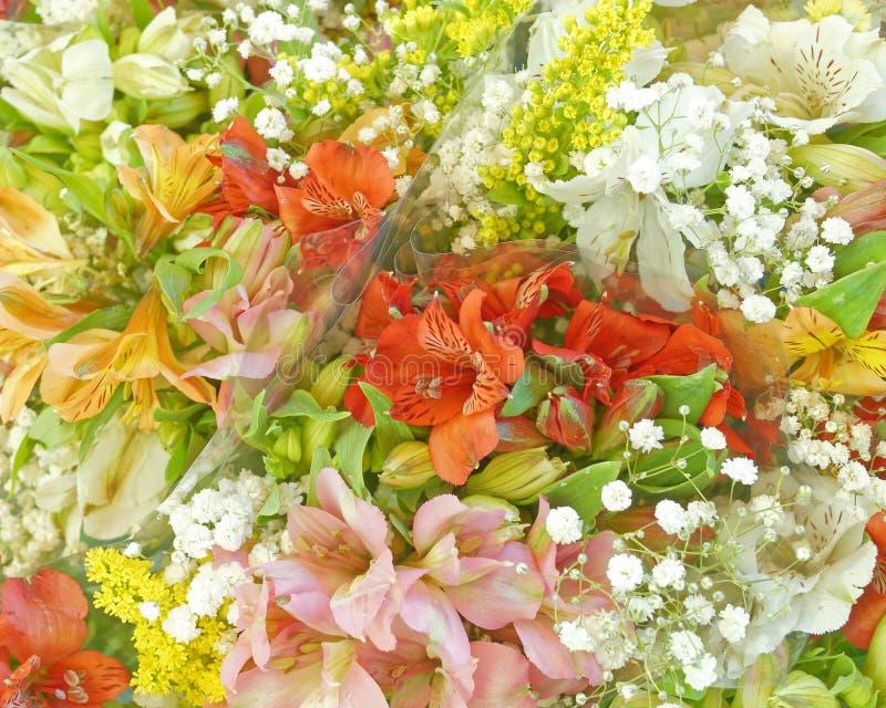 Verbleek de gekleurde hoogste mening van fresiabloemen royalty-vrije stock afbeeldingen
