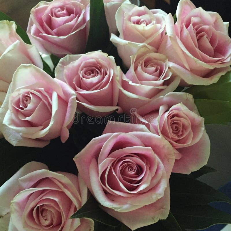 Verbleek - roze rozen royalty-vrije stock fotografie