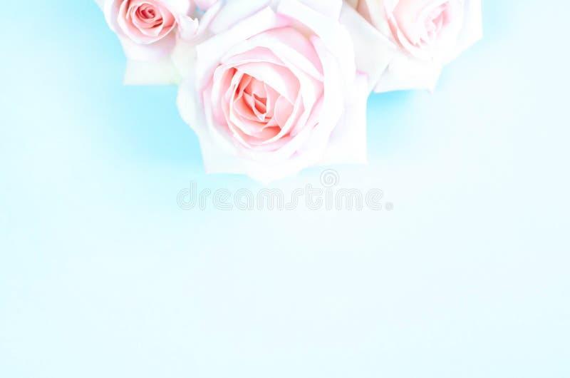 Verbleek - roze rozen op een lichtblauwe achtergrond royalty-vrije stock afbeeldingen